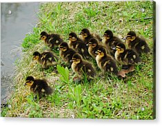 Traffic Jam Acrylic Print by Frozen in Time Fine Art Photography