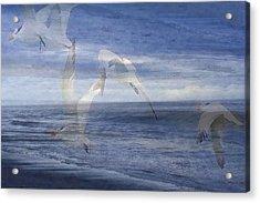 Transparent Flight Acrylic Print by James Chesnick