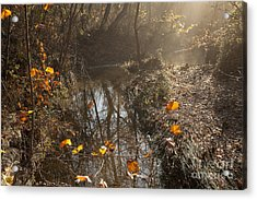 Travertine Creek In The Woods Acrylic Print by Iris Greenwell