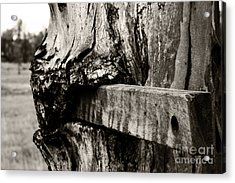 Tree And Wood Acrylic Print by Sarah Sutherland