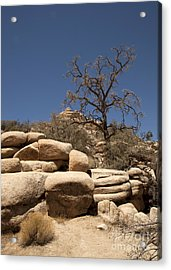Tree At Joshua Tree Acrylic Print by Amanda Barcon