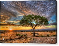 Tree At Sunset Acrylic Print by William Wetmore