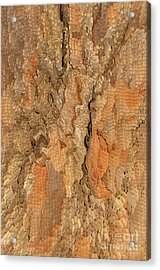 Tree Bark Abstract Acrylic Print by Cindy Lee Longhini