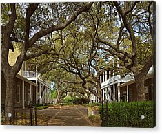 Tree Canopy In San Antonio Tx Acrylic Print by Christine Till