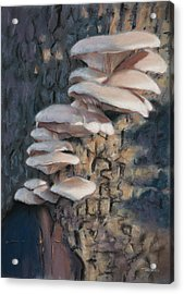Tree Ears Acrylic Print by Christopher Reid