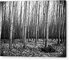 Tree Farm Acrylic Print by Chalet Roome-Rigdon