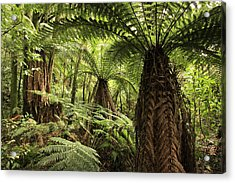 Tree Ferns Acrylic Print by Les Cunliffe