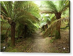 Tree Ferns On Valentia Island Acrylic Print by Sinclair Stammers
