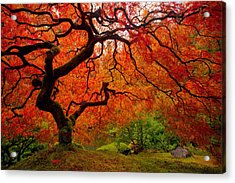 Tree Fire Acrylic Print by Darren  White