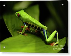 Tree Frog 12 Acrylic Print by Bob Christopher