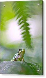 tree frog Hyla arborea Acrylic Print by Dirk Ercken