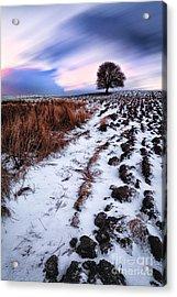 Tree In A Field  Acrylic Print by John Farnan