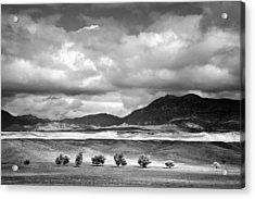 Tree Line Acrylic Print by Peter Tellone