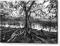 Tree Of Life Acrylic Print by Debra and Dave Vanderlaan