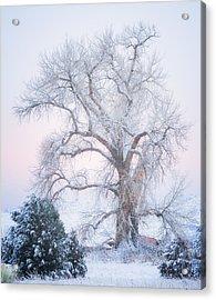 Tree Of Snow Acrylic Print by Darren  White
