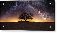 Tree Of Wisdom Acrylic Print by Aaron J Groen