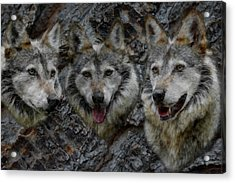 Tree Of Wolves Acrylic Print by Ernie Echols