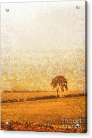 Tree On Hill At Dusk Acrylic Print by Pixel  Chimp