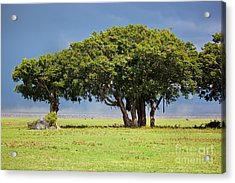 Tree On Savannah. Ngorongoro In Tanzania Acrylic Print by Michal Bednarek