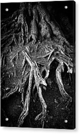 Tree Roots Black And White Acrylic Print by Matthias Hauser