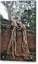 Tree Roots On Ruins At Angkor Wat Acrylic Print by Sami Sarkis