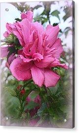 Tree Rose Of Sharon Acrylic Print by Kay Novy