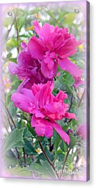 Tree Roses Of Sharon Acrylic Print by Kay Novy