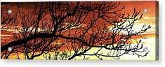 Tree Silhouette At Sunset, Warner Acrylic Print by Panoramic Images