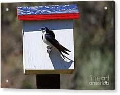 Tree Swallow Home Acrylic Print by Mike  Dawson