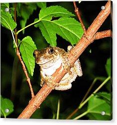 Tree Toad Night Acrylic Print by Tamara Stickler
