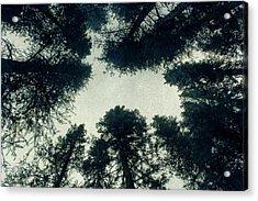 Tree Tops Acrylic Print by Brett Pfister