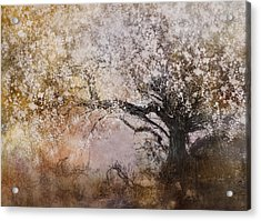 Tree Whispers Acrylic Print by Amy Weiss