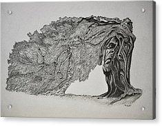 Tree With Faces Acrylic Print by Glenn Calloway