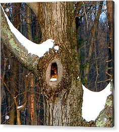Tree With Snow Acrylic Print by Mike McCool