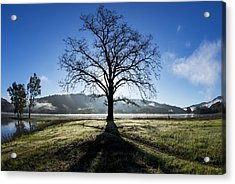Trees Are Us Acrylic Print by Sean Foster