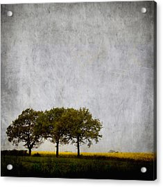 Trees At Sunrise Acrylic Print by Carol Leigh