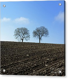 Trees In A Agricultural Landscape. Acrylic Print by Bernard Jaubert