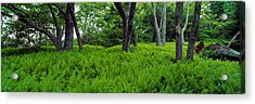 Trees In A Forest, North Carolina, Usa Acrylic Print by Panoramic Images