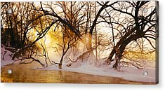 Trees In A Forest Acrylic Print by Panoramic Images