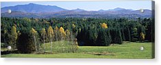 Trees In A Forest, Stowe, Lamoille Acrylic Print by Panoramic Images
