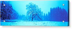Trees In A Snow Covered Landscape Acrylic Print by Panoramic Images