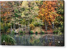 Trees In Autumn Acrylic Print by Natalie Kinnear