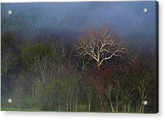 Trees In Fog 4 Acrylic Print by Dena Kidd
