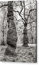 Trees In Hyde Park London Acrylic Print by Jim Hughes
