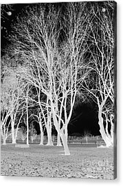 Trees In Park 2 Acrylic Print by Chalet Roome-Rigdon