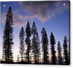 Trees In Silhouette Acrylic Print by Adam Romanowicz