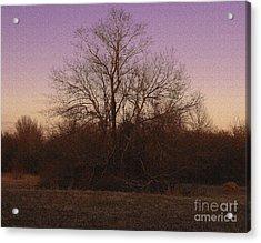 Trees In The Setting Sun Acrylic Print by R McLellan