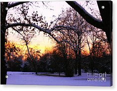 Trees In Wintry Pennsylvania Twilight Acrylic Print by Anna Lisa Yoder