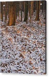 Trees Acrylic Print by Steven Ralser