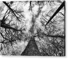 Treetops Acrylic Print by Tom Druin